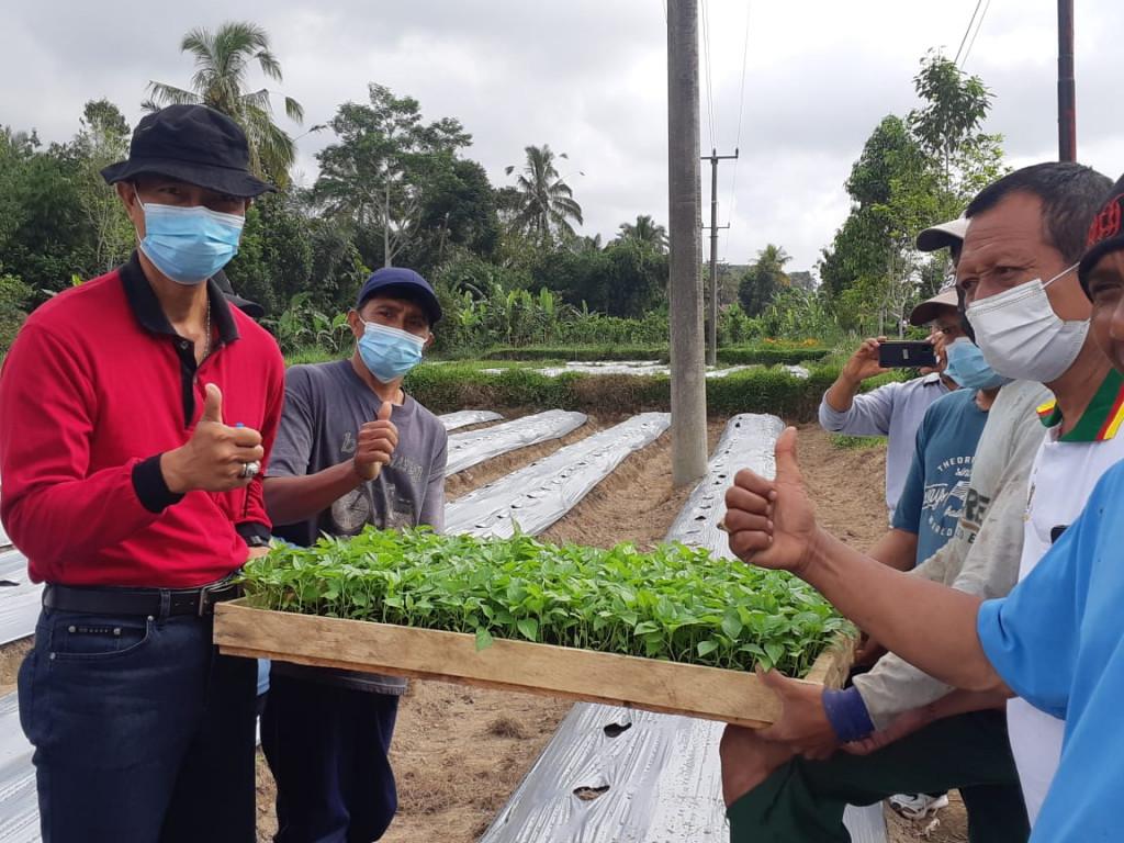 Antisipasi Kelangkaan dan Gejolak Harga, Dinas Pertanian dan Pangan Badung Sebar Ribuan Bibit Cabai